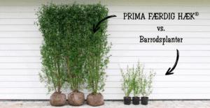 PRIMA FÆRDIG HÆK vs. barrodsplanter