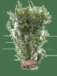 Snowmound busk